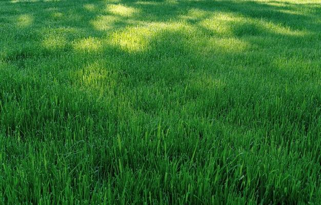 Зеленое травянистое поле и яркие пятна солнечного света, текстурированный фон.