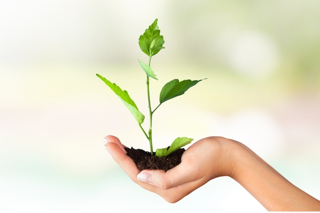 Green growing plant in human hand on beautiful natural background