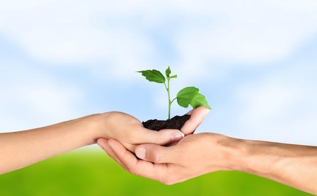 아름 다운 자연 배경에 인간의 손에 녹색 성장 식물