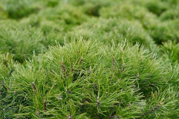 緑の成長の背景