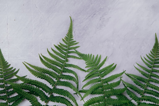 Green hart's-tongue branches on a marble background. copy space