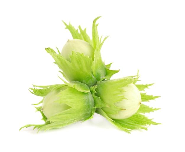 녹색 헤이즐넛 너트 흰색 배경에 고립입니다. 신선한 녹색 헤이즐넛입니다.