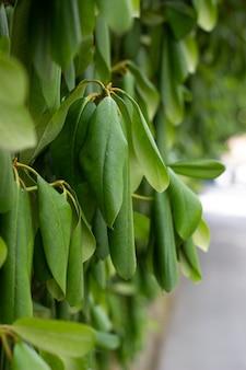 녹색 울타리 또는 녹색 잎 벽에 격리된, 클리핑 패스가 있는 개체.