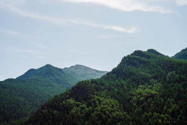맑고 푸른 하늘 아래 녹색 언덕 정상입니다.