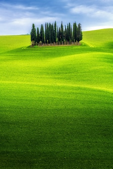 Green hills landscape of tuscany, italy