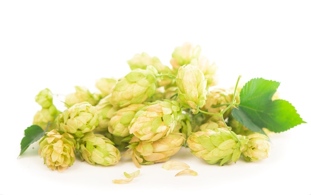 Green hop cones isolated on white, brewing, natural beer production