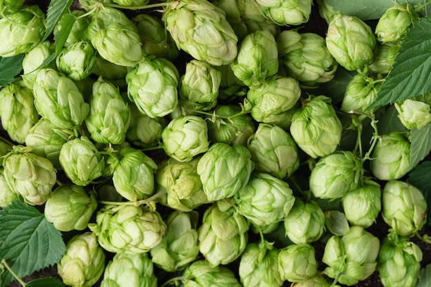 Зеленый фон хмеля концепция пивоварни