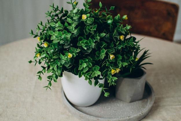 コンクリートの鉢に緑の観葉植物