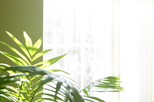 온실 식물 - 햇빛이 비치는 창문 근처의 실제 방에 있는 열대 야자수. 흐리게 집 정원 배경입니다. 집 식물을 사용한 트렌디한 인테리어 디테일. 공간을 복사합니다. 소프트 포커스입니다. 집 개념에서 자연입니다.