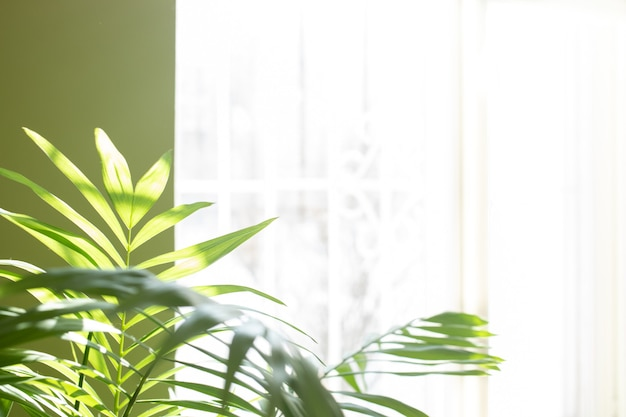 Green house plant - tropical palm in real room near sunlit window. blurred home garden background. trendy interior details with house plants. copy space. soft focus. nature at home concept.