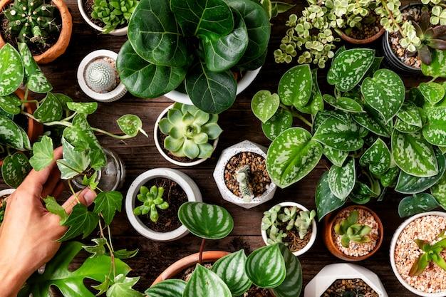 식물 애호가를 위한 녹색 관엽 식물 배경