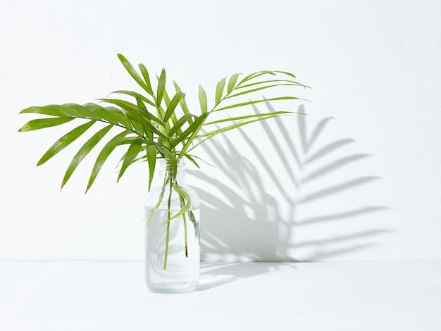 유리 항아리에 녹색 관엽 식물