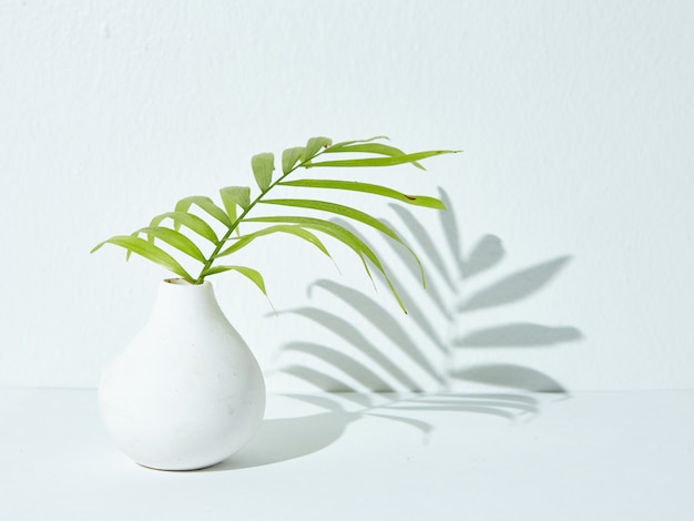 Green houseplant in a white ceramic vase with its shadow falling on a white surface