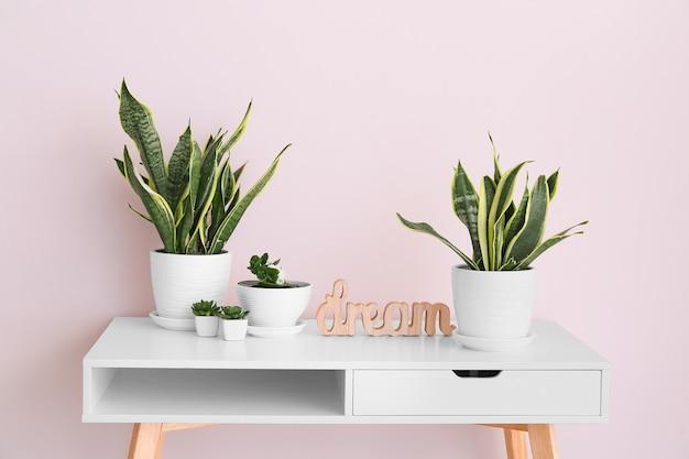Зеленые комнатные растения на столе у светлой стены в комнате