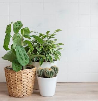 Зеленые комнатные растения на столе в доме
