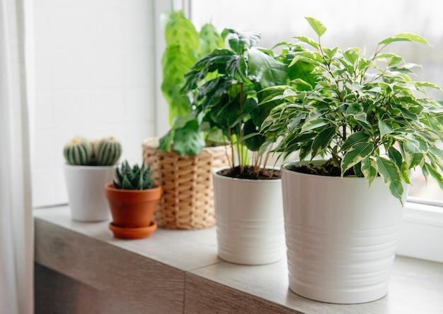 집 창턱에 녹색 실내 식물