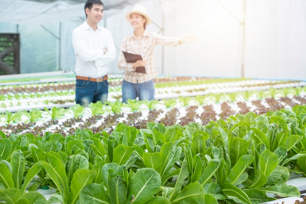 Green hydroponic oak farm with out of focus of asian business man and asian farmer woman