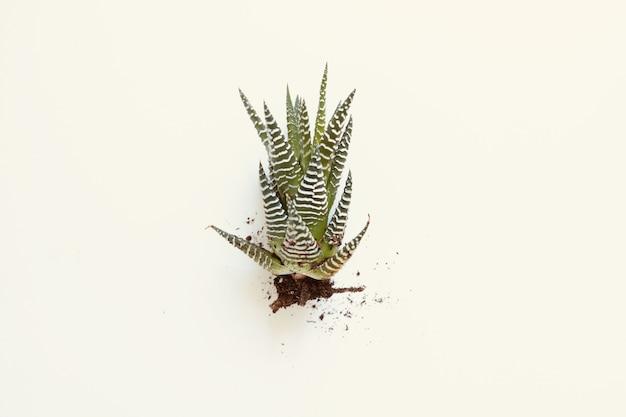 Зеленое комнатное растение