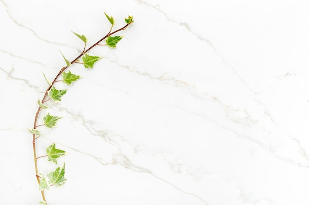 Green ivy leaves on white marble background. natural backdrop. flat lay. copy space