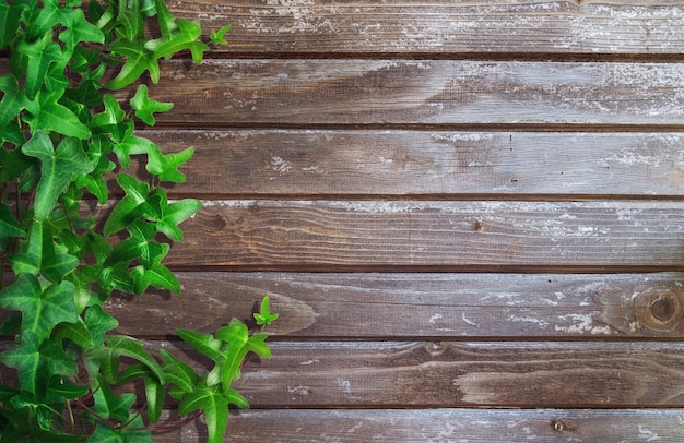 Green ivy on wooden planks background. space for text.