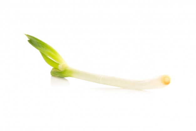 Green japanese bunching onion on white background