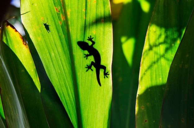 Green jungle leaf with gecko on top