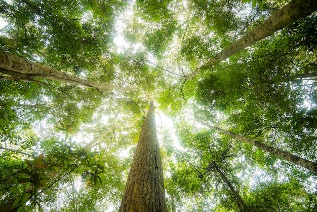 Зеленое дерево джунглей с зелеными листьями и солнечным светом и деталью растений природа в лесу заглядывает под дерево