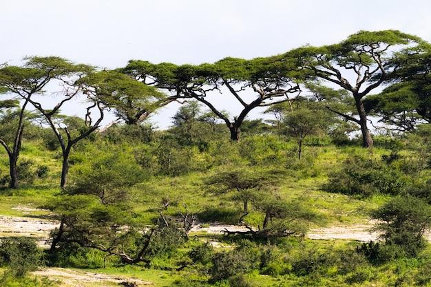 Зеленый пейзаж в серенгети. танзания, африка