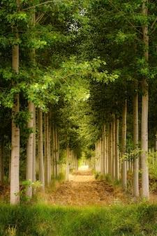 식물의 터널을 형성하는 관점에서 나무의 녹색 풍경.