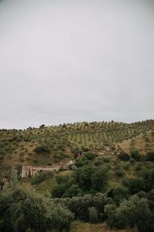 Зеленый пейзаж с множеством зеленых деревьев и гор под грозовыми облаками