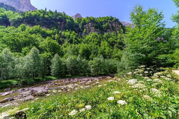 Зеленый пейзаж с цветами и ручей с водой весной или летом. деревья и горы на заднем плане.
