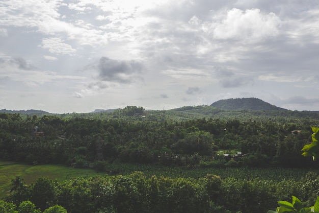 Green landscape with hill in the background