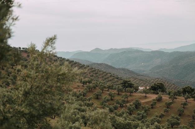 Paesaggio verde con molti alberi verdi e montagne sotto le nuvole temporalesche