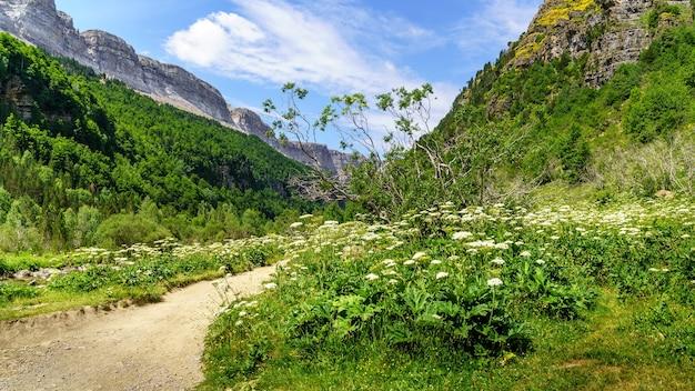 꽃과 ordesa 피레네 산맥 계곡에서 산 사이 경로와 녹색 풍경.