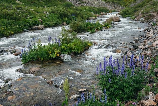 澄んだ山の川の近くにラークスパーと野生植物の紫色の花と緑の風景。マウンテンクリークの透明な水と素晴らしい景色。野生の植物が生い茂る小さな川の美しい景色。