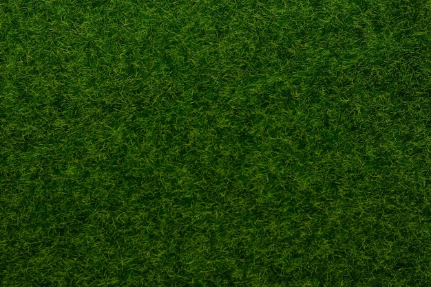 緑の芝生の背景。緑の草、上面図。