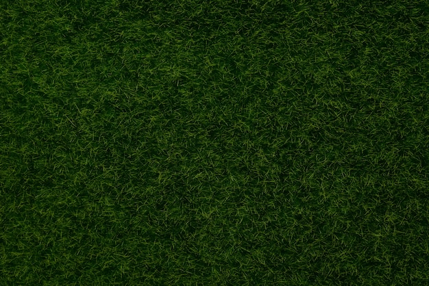 Green lawn background top view