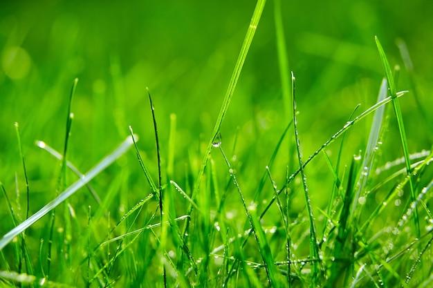 신선한 봄 잎에 물 방울과 녹색 잔디 잔디