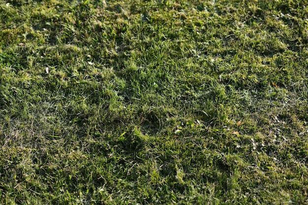 状態の悪い緑の芝生とメンテナンスが必要です。クローズアップショット