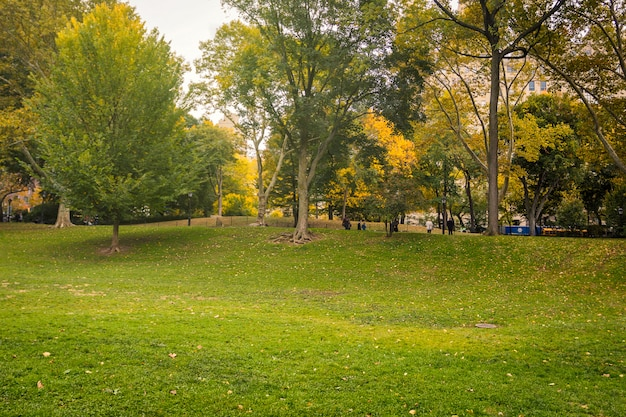 Зеленый газон в центральном парке в осенний сезон, нью-йорк