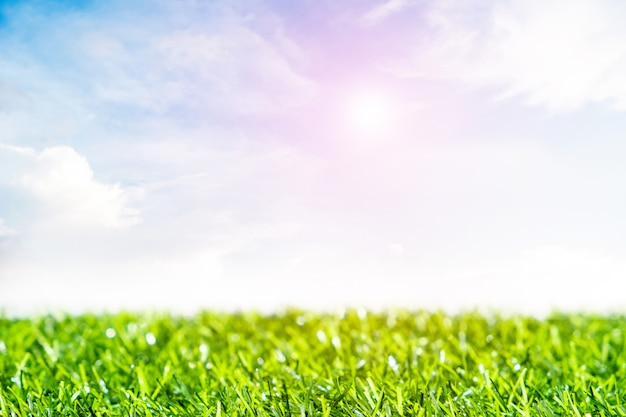 Green lawn with blue sky.  spring landscape in sunny day.