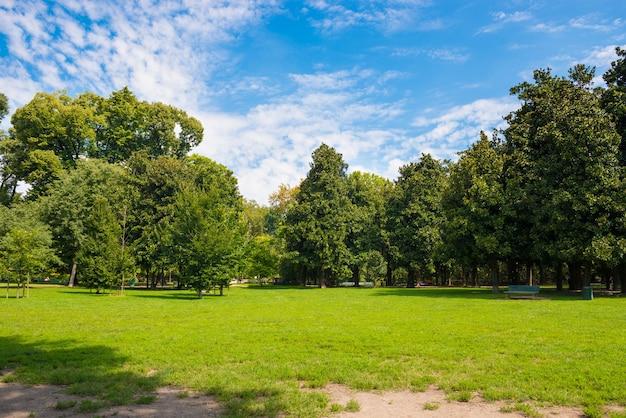 맑은 빛 아래 공원에서 나무와 녹색 잔디