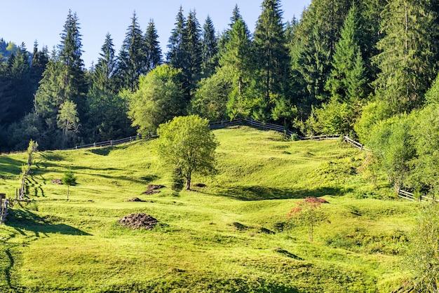森の近くの木々と緑の芝生。自然の景観