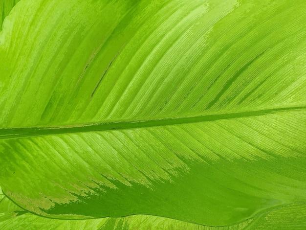 Зеленый лист абстрактный узор