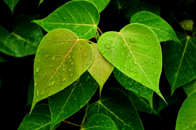 Green leaf after raining day