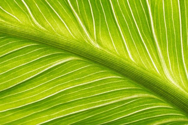 Green leaf against the light