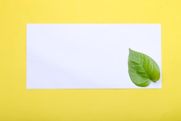 Зеленый лист и пустая белая бумага с цветным фоном. пустой белый документ для копирования пространства