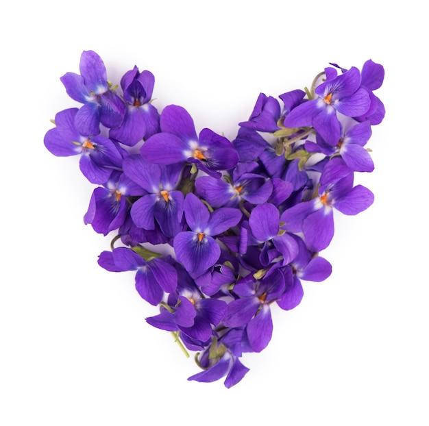 Зеленые листья и цветки древесины фиолетового изолированного viola odorata. лекарственное и садовое растение