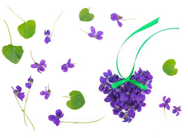 緑の葉と白い表面に分離されたウッドバイオレットviolaodorataの花。春の花がハートの形に配置されています