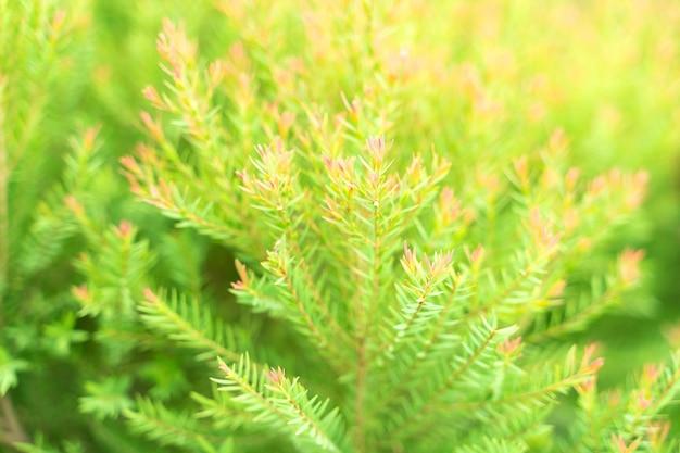 Фон зеленый лист. абстрактные листья шаблон для фона шаблона природы. крупный план.